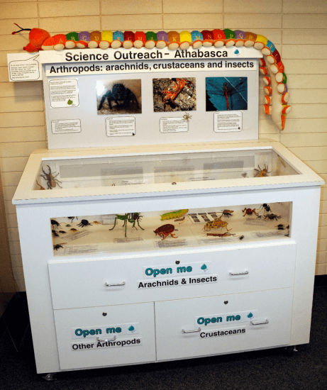 Travelling exhibit on arthropods loaned to schools and libraries. Photo: R.G. Holmberg.